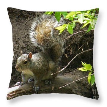 Throw Pillow featuring the photograph Grey Squirrel  by Phil Banks