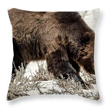 Throw Pillow featuring the photograph Grizzly Bear Snaggletooth by Yeates Photography