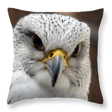 Gryfalcon Close Up Throw Pillow