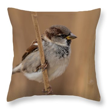 House Sparrow Passer Domesticus Throw Pillow by Gabor Pozsgai