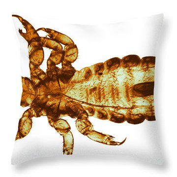 Human Louse, Lm Throw Pillow by Eric V. Grave