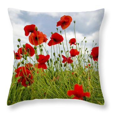 Throw Pillow featuring the photograph In Flanders Fields by Ross G Strachan