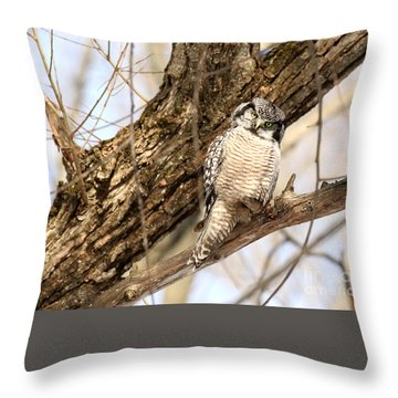 Throw Pillow featuring the photograph Inquisitive by Heather King