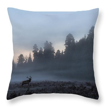 Into The Mist Throw Pillow by Scott Warner