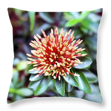 Jamaican Prick Throw Pillow