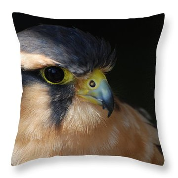 Kestrel Falcon Throw Pillow