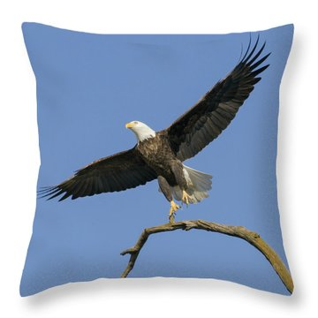King Of The Sky 3 Throw Pillow by David Lester