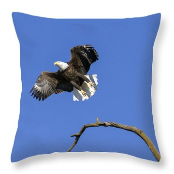 King Of The Sky 4 Throw Pillow by David Lester