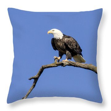 King Of The Sky Throw Pillow by David Lester