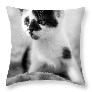 Kitten Dreaming Throw Pillow