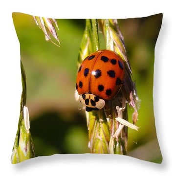 Throw Pillow featuring the tapestry - textile Lady Bug by Dennis Bucklin