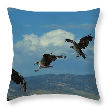 Landing Pattern Of The Osprey Throw Pillow by Ernie Echols