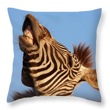 Throw Pillow featuring the photograph Laughing Zebra by Nick  Biemans