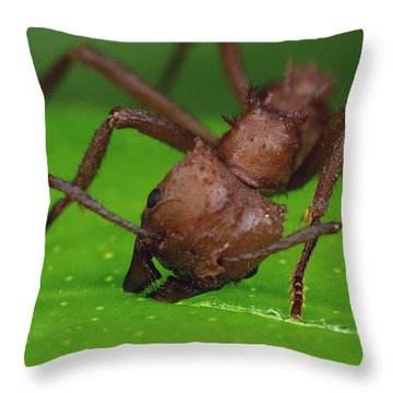 Leafcutter Ant Cutting Papaya Leaf Throw Pillow by Mark Moffett
