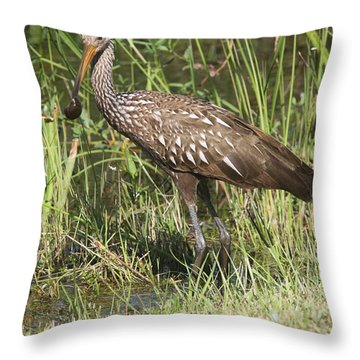Throw Pillow featuring the photograph Limpkin In The Glades by Christiane Schulze Art And Photography