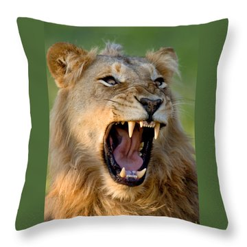 Lion Throw Pillow by Johan Swanepoel