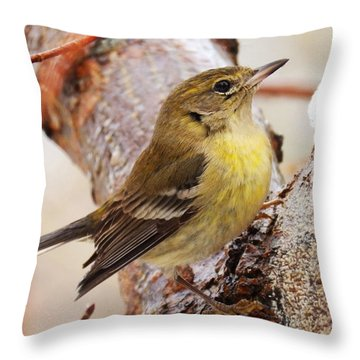 Throw Pillow featuring the photograph Looking Up by Zinvolle Art