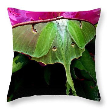 Lady Luna Moth Throw Pillow