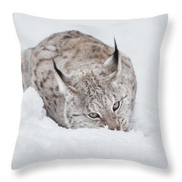 Lynx Wild Cat Throw Pillow