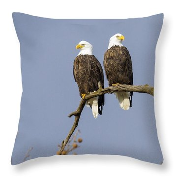 Majestic Beauty 5 Throw Pillow by David Lester