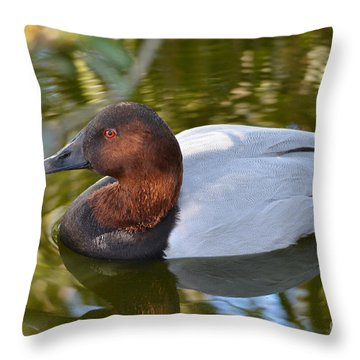 Male Canvasback Duck Throw Pillow by Kathy Baccari