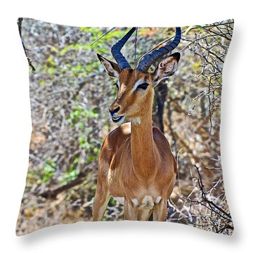 Male Impala In Kruger National Park-south Africa   Throw Pillow