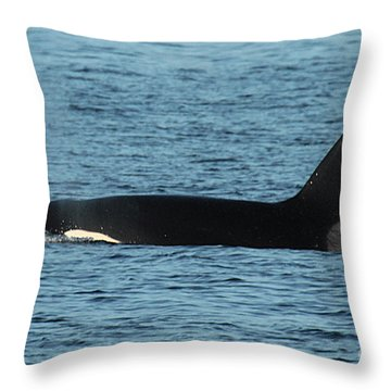 Throw Pillow featuring the photograph Male Orca Killer Whale In Monterey Bay California 2013 by California Views Mr Pat Hathaway Archives