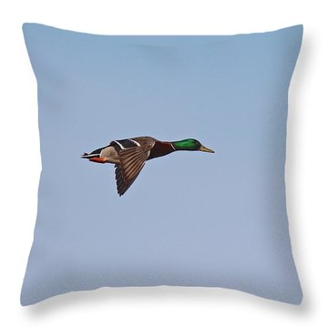 Mallard Drake Flight Throw Pillow
