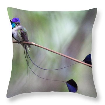 Marvelous Spatuletail Throw Pillow by Max Waugh