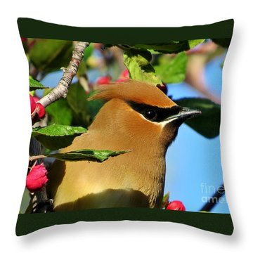 Masked Bandit Throw Pillow by Michele Penner