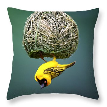 Masked Weaver At Nest Throw Pillow