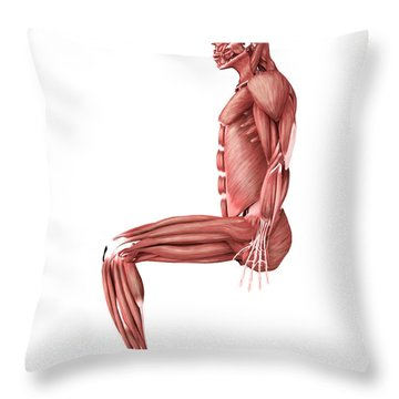 Medical Illustration Of Male Muscles Throw Pillow