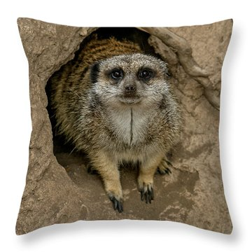 Meerkat Throw Pillow by Ernie Echols