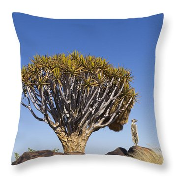 Meerkat In Quiver Tree Grassland Throw Pillow