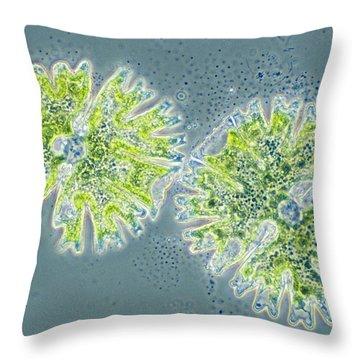 Micrasterias Throw Pillow by Michael Abbey