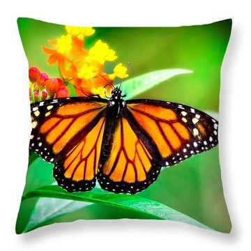 Monarch Butterfly Throw Pillow by Mark Andrew Thomas