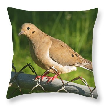 Morning Dove I Throw Pillow by Debbie Portwood