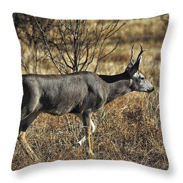 Throw Pillow featuring the photograph Mule Deer Buck by Karen Slagle