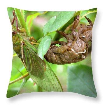 Cicada Throw Pillows