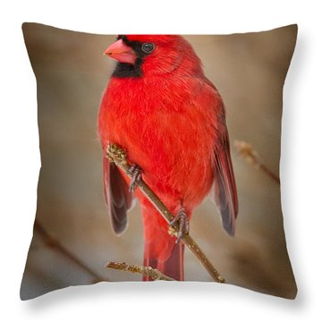 Northern Cardinal Throw Pillow by Bill Wakeley
