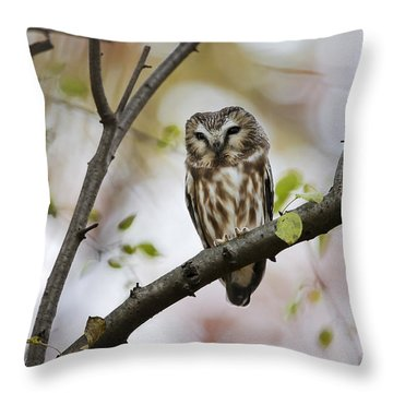 Throw Pillow featuring the photograph Northern Saw Whet Owl by Gary Hall