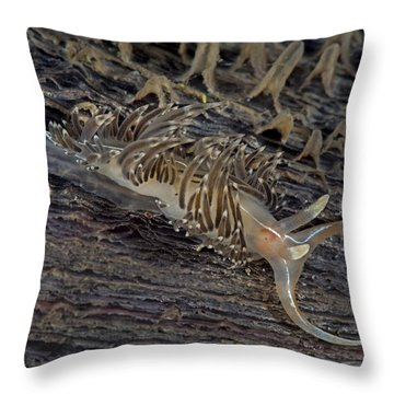 Nudibranch Sitting On A Pen Shell Throw Pillow
