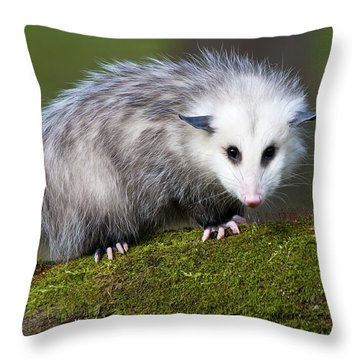 Opossum  Throw Pillow by Paul Cannon