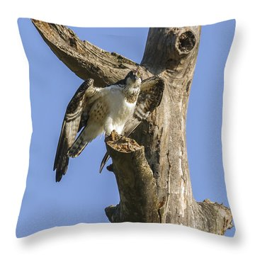Osprey Pose Throw Pillow