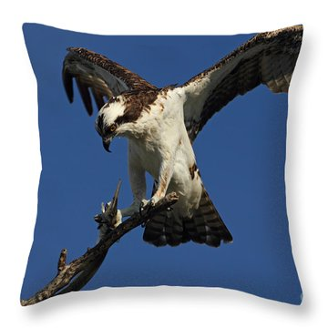 Throw Pillow featuring the photograph Osprey With A Fish Photo by Meg Rousher