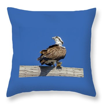 Osprey With Fish In Talons Throw Pillow by Dale Powell