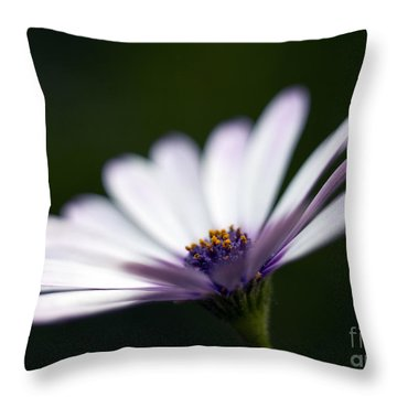 Osteospermum Daisy Throw Pillow by Tony Cordoza