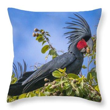 Palm Cockatoo Male Feeding On Nonda Throw Pillow