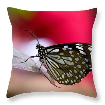 Paper Kite Butterfly  Throw Pillow by Saija  Lehtonen