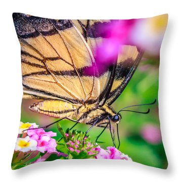 Throw Pillow featuring the photograph Papilio Glaucus by Rob Sellers